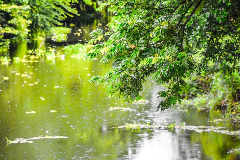 Φυσικό τοπίο στο κανάλι κατά τη διάρκεια της περιόδου βροχών, ατμόσφαιρα απογεύματος μετά από τη βροχή, όμορφος πράσινος στην πόλ στοκ εικόνες με δικαίωμα ελεύθερης χρήσης