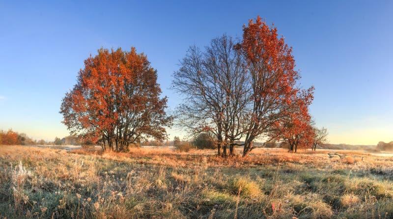 Φυσικό τοπίο φθινοπώρου του ζωηρόχρωμου λιβαδιού φύσης τον Οκτώβριο με τα δέντρα Κόκκινο φύλλωμα στο δέντρο και hoarfrost στη χλό στοκ εικόνες
