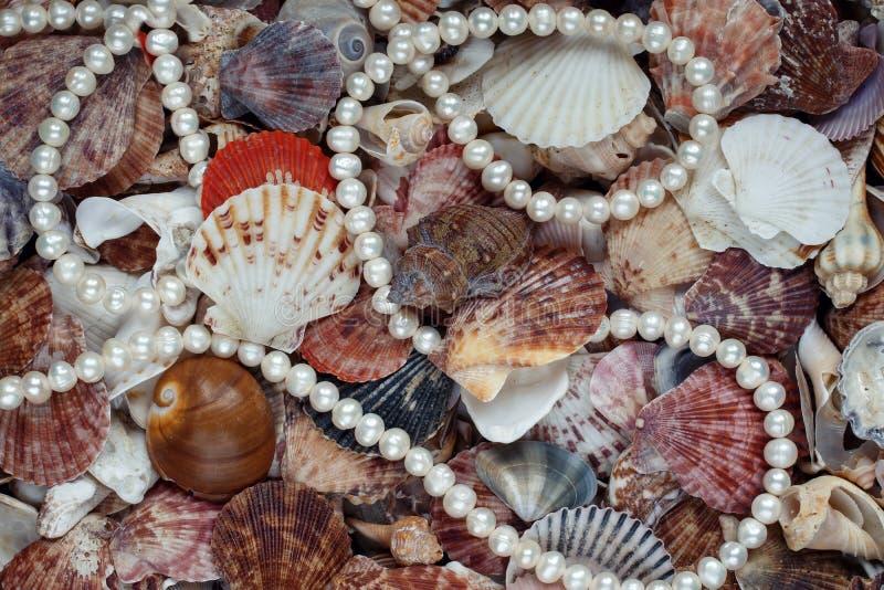 Φυσικό υπόβαθρο θάλασσας από πολλά κοχύλια των διαφορετικών μορφών και στοκ φωτογραφία
