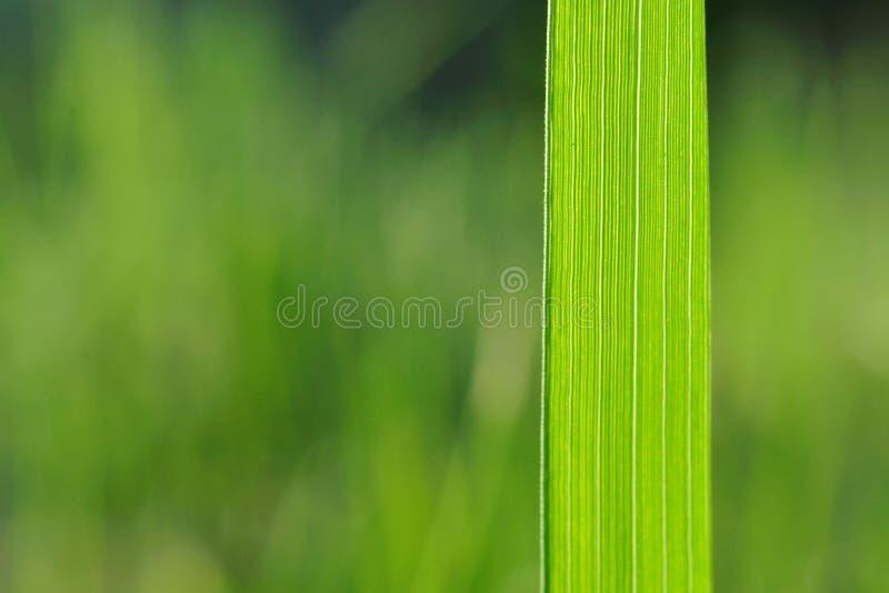 Φυσικό υπόβαθρο με την πράσινη λεπίδα χλόης στοκ εικόνες με δικαίωμα ελεύθερης χρήσης