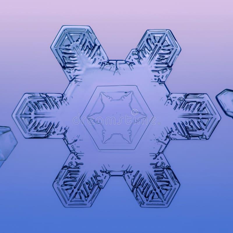 Φυσικό χειμερινό Snowflake στοκ φωτογραφίες με δικαίωμα ελεύθερης χρήσης