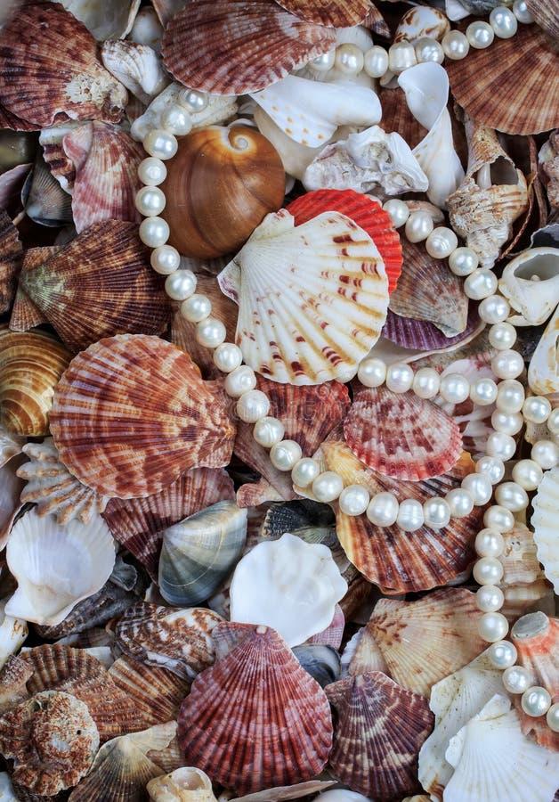Φυσικό όμορφο υπόβαθρο θάλασσας από πολλά κοχύλια του διαφορετικού s στοκ φωτογραφίες με δικαίωμα ελεύθερης χρήσης