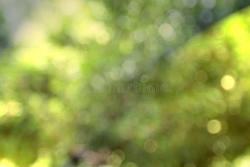 Φυσικό bokeh που θολώνεται με το χρυσό τόνο στοκ φωτογραφία με δικαίωμα ελεύθερης χρήσης