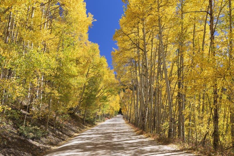 Φυσικό Drive βουνών μέσω Aspens στοκ φωτογραφία