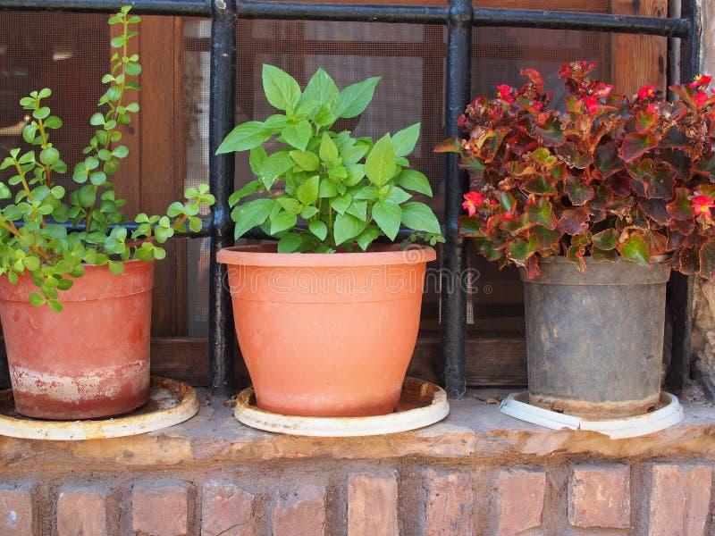 Φυτά γλαστρών στην προεξοχή παραθύρων στοκ εικόνα με δικαίωμα ελεύθερης χρήσης