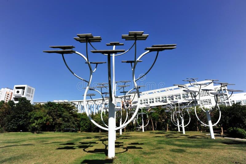 φυτά ηλιακά στοκ φωτογραφίες με δικαίωμα ελεύθερης χρήσης