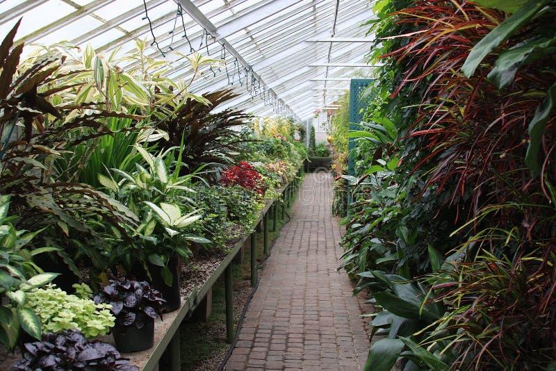 φυτά θερμοκηπίων Στοκ Φωτογραφία