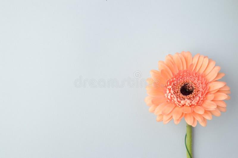 φυτά κήπων λουλουδιών ανασκόπησης phloxes στοκ φωτογραφία