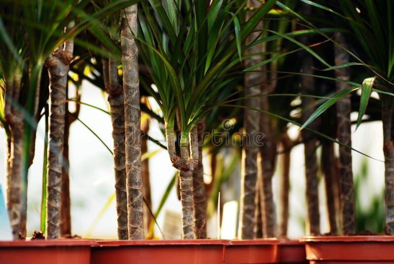 Download φυτά κεντρικών κήπων στοκ εικόνα. εικόνα από άνθισμα - 22784983
