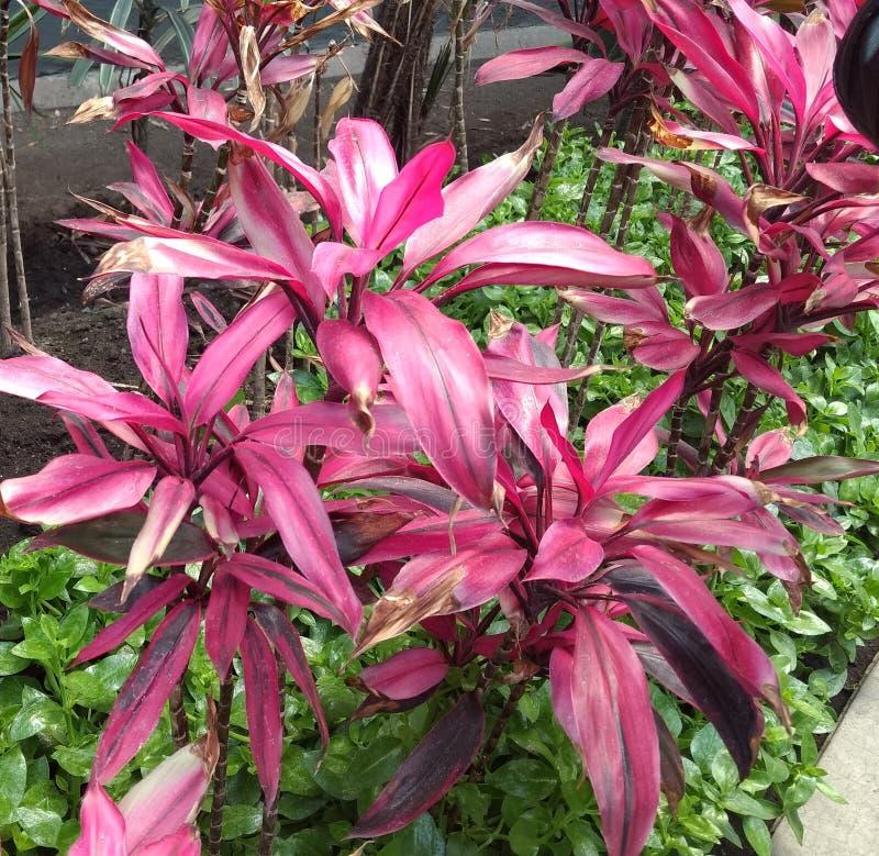 φυτά στοκ φωτογραφίες