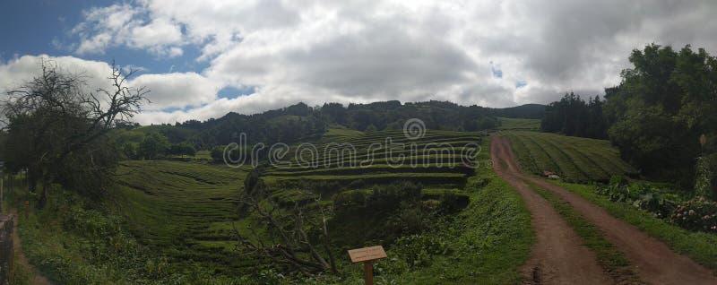Φυτεία Αζόρες τσαγιού στοκ φωτογραφία με δικαίωμα ελεύθερης χρήσης