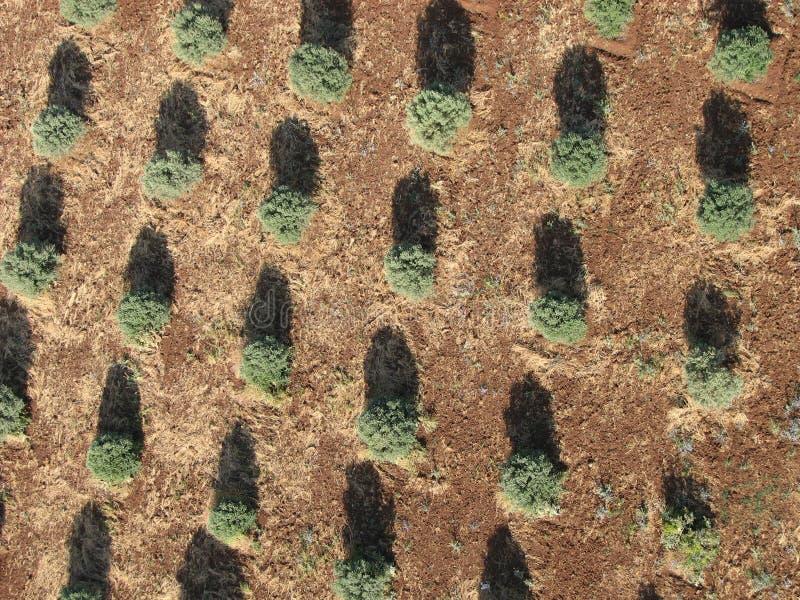 Φυτεία δέντρων από την κορυφή στοκ φωτογραφίες