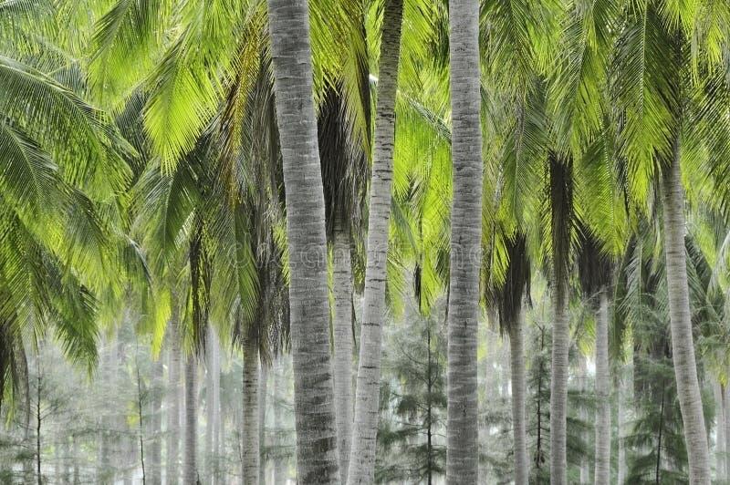 φυτεία καρύδων στοκ φωτογραφίες με δικαίωμα ελεύθερης χρήσης