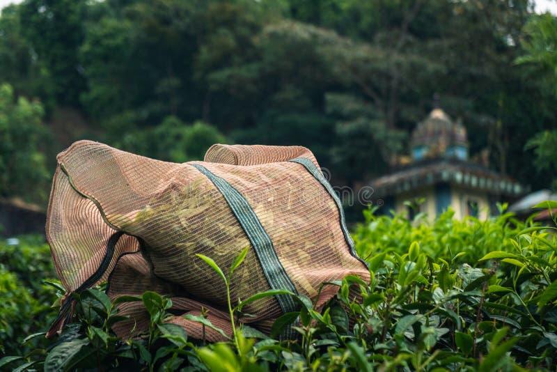 Φυτεία Κεράλα Ινδία τσαγιού Munnar πράσινη στοκ εικόνες με δικαίωμα ελεύθερης χρήσης