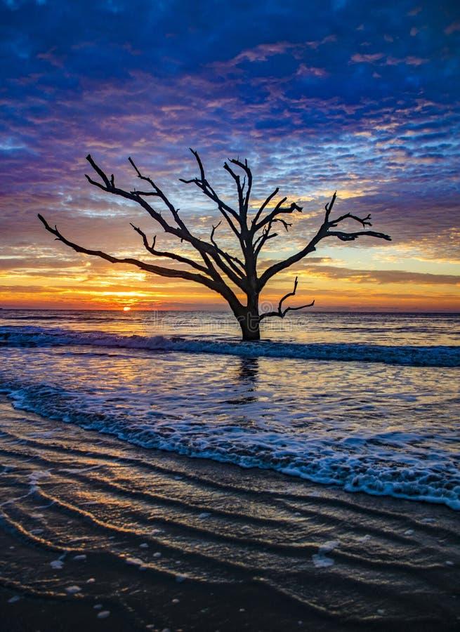 Φυτεία κόλπων βοτανικής στη νότια Καρολίνα νησιών Editso κοντά σε Charl στοκ φωτογραφία με δικαίωμα ελεύθερης χρήσης