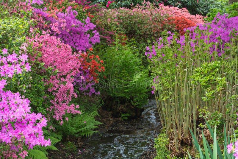 Φυτεία της Isabella στο πάρκο του Ρίτσμοντ στοκ εικόνα