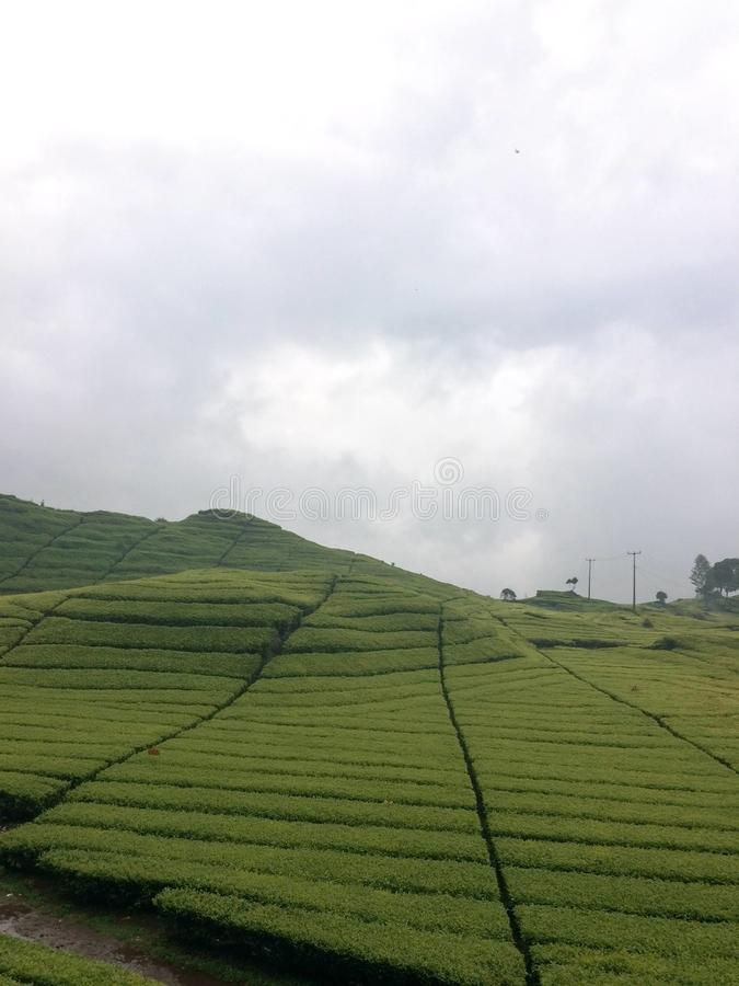 Φυτεία τσαγιού σε Bandung, Ινδονησία στοκ φωτογραφίες με δικαίωμα ελεύθερης χρήσης