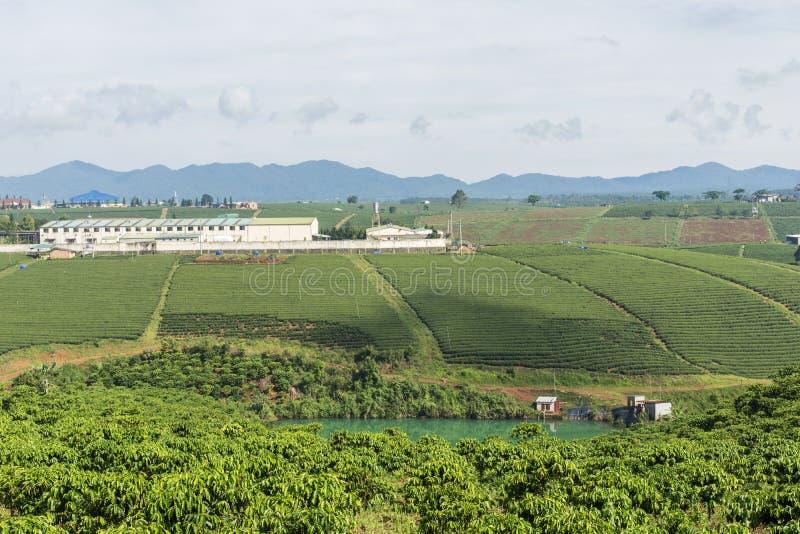 Φυτεία τσαγιού σε Bao LOC, ήχος καμπάνας Lam, Βιετνάμ στοκ εικόνες