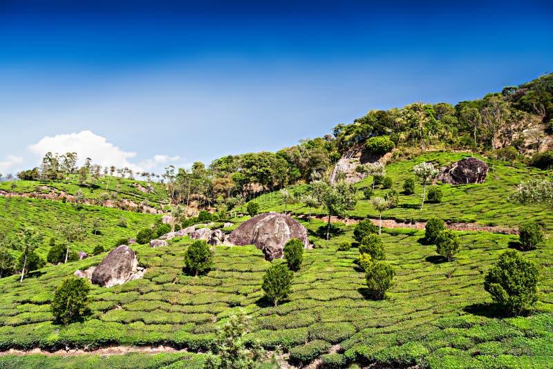 Φυτεία τσαγιού σε Munnar στοκ φωτογραφία με δικαίωμα ελεύθερης χρήσης