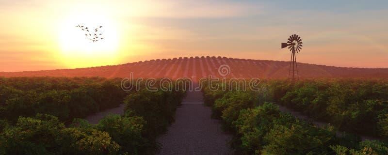 Φυτεία τσαγιού στοκ εικόνες