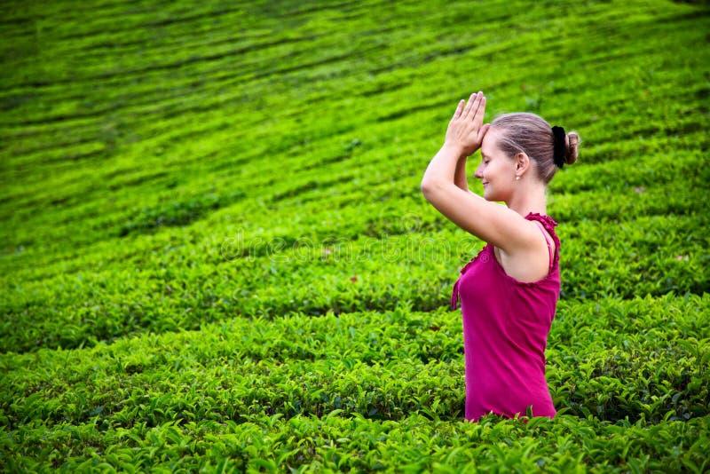 φυτείες που προσεύχονται τη γυναίκα τσαγιού στοκ εικόνες