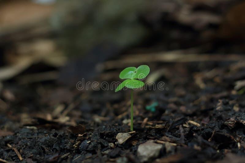 Φυτεψτε ένα δέντρο στη φύση που περιμένει μια μεγάλη ημέρα στοκ εικόνες