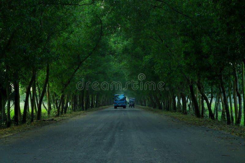 Φυτικά δέντρα σώνουν τη γη στοκ φωτογραφία με δικαίωμα ελεύθερης χρήσης