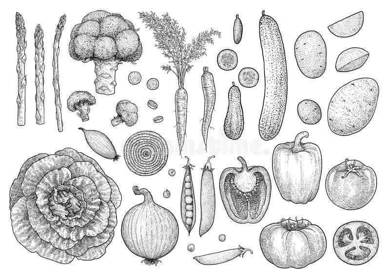 Φυτική συλλογή, απεικόνιση, σχέδιο, χάραξη, μελάνι, τέχνη γραμμών, διάνυσμα ελεύθερη απεικόνιση δικαιώματος