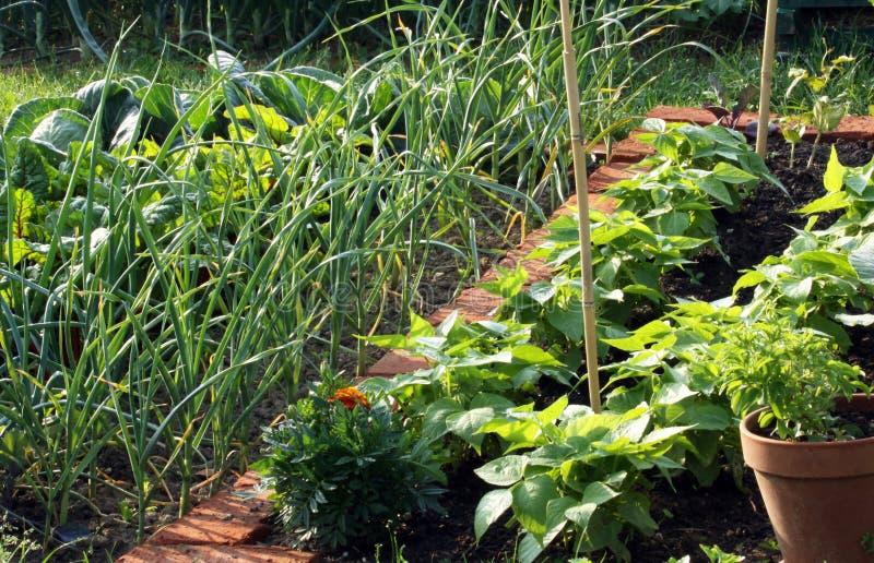 Φυτικός κήπος στοκ εικόνα