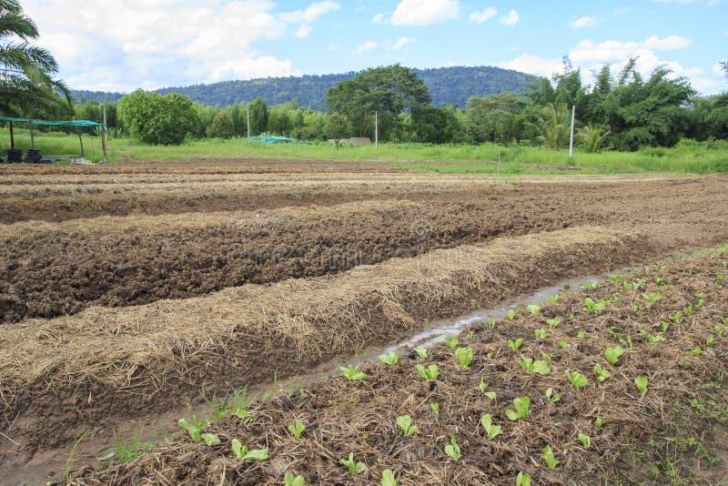 Φυτικό αγρόκτημα στοκ φωτογραφίες
