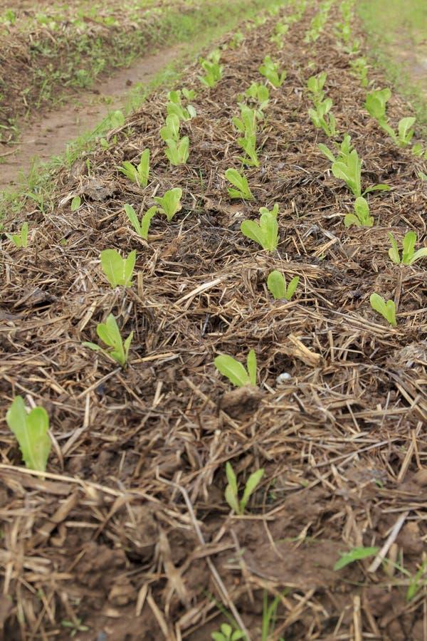 Φυτικό αγρόκτημα στοκ εικόνα με δικαίωμα ελεύθερης χρήσης