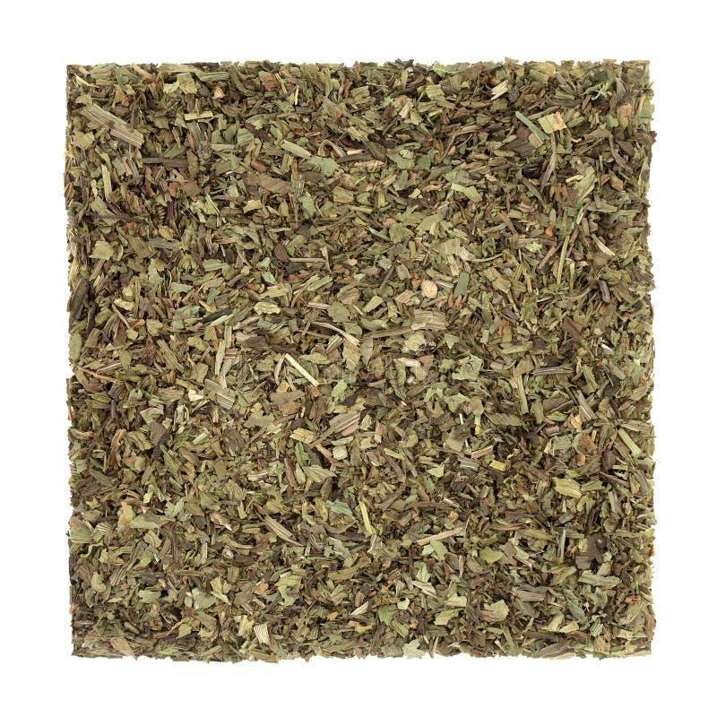 Φυτικό Φάρμακο Φυτικών Φυτών στοκ φωτογραφία με δικαίωμα ελεύθερης χρήσης