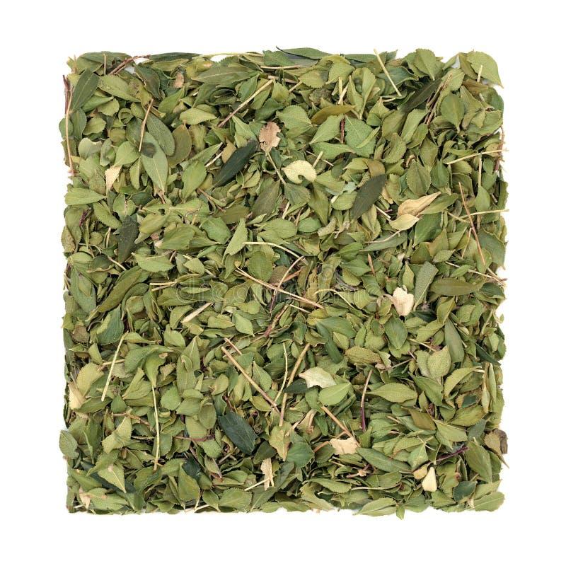 Φυτικό Φάρμακο Buchu Herb στοκ φωτογραφίες με δικαίωμα ελεύθερης χρήσης