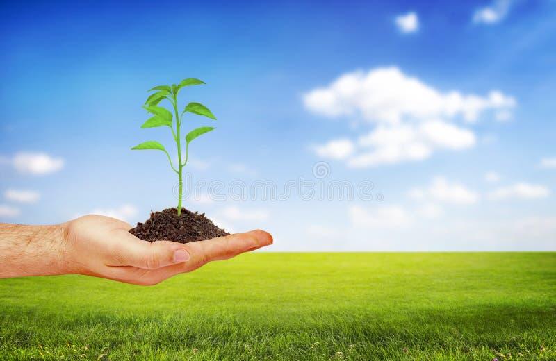 φυτό εκμετάλλευσης χερ στοκ εικόνες