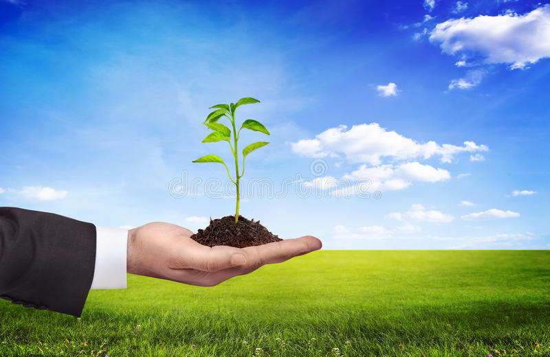φυτό εκμετάλλευσης χερ στοκ φωτογραφία με δικαίωμα ελεύθερης χρήσης