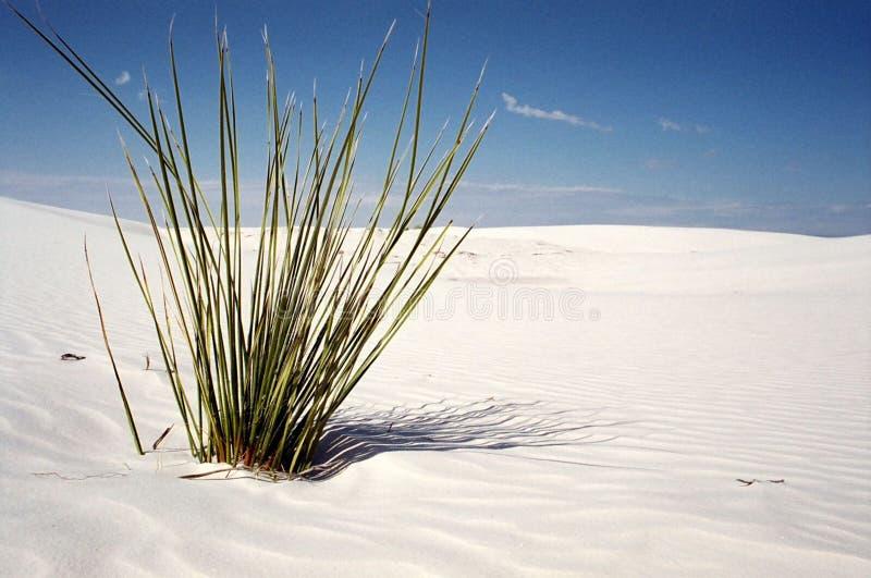 φυτό ερήμων στοκ φωτογραφίες