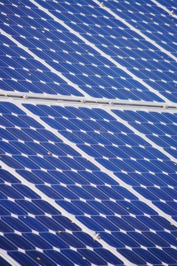 φυτό ηλιακό στοκ φωτογραφίες με δικαίωμα ελεύθερης χρήσης