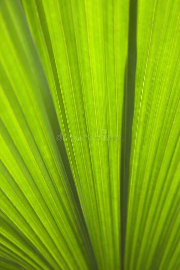 φυτό λεπτομέρειας στοκ φωτογραφία με δικαίωμα ελεύθερης χρήσης