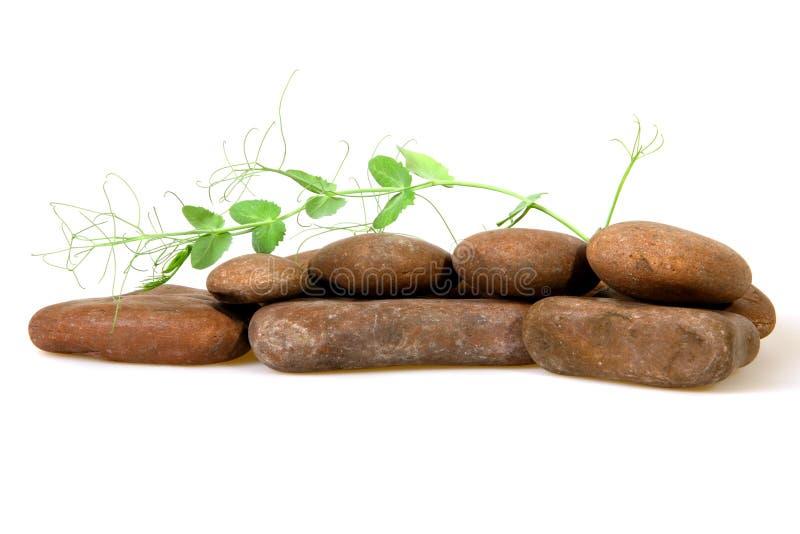Φυτό μεταξύ των πετρών Δωρεάν Στοκ Εικόνα