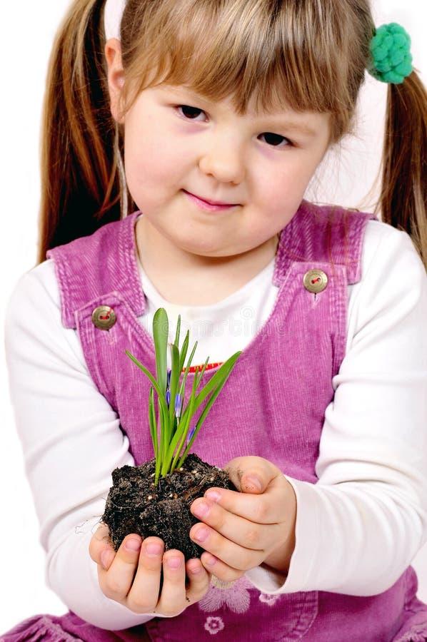 φυτό μικρό στοκ εικόνα με δικαίωμα ελεύθερης χρήσης