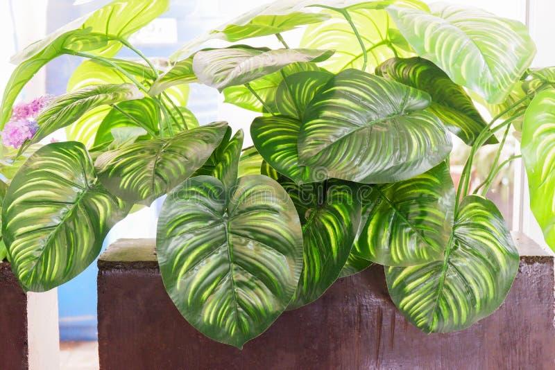 Φυτό 'Οικωών στοκ εικόνα
