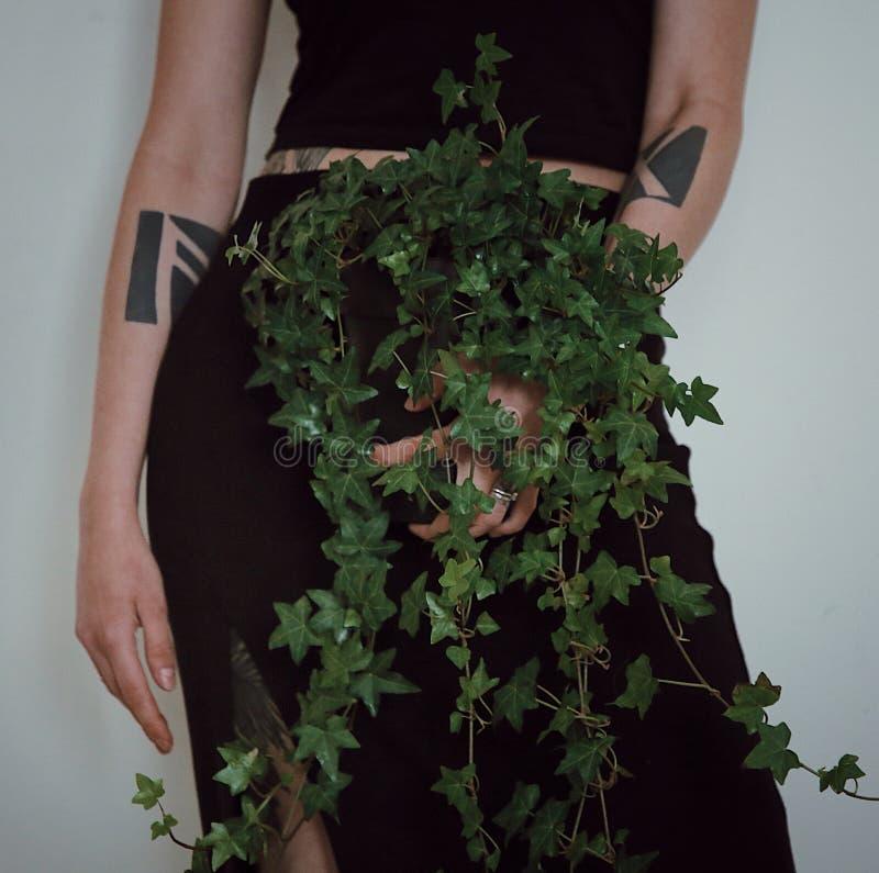 Φυτό 'Οικωών στοκ φωτογραφία με δικαίωμα ελεύθερης χρήσης