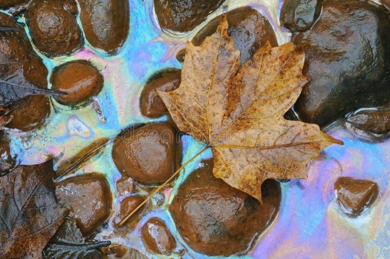φυτό πετρελαίων φύλλων στοκ φωτογραφίες με δικαίωμα ελεύθερης χρήσης