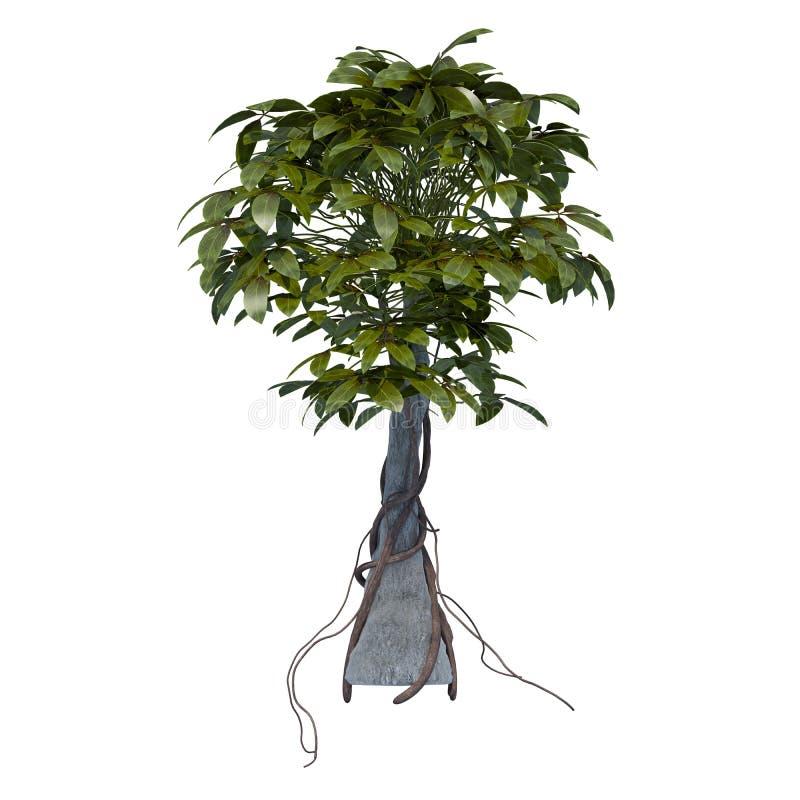 Φυτό που απομονώνεται στοκ φωτογραφίες με δικαίωμα ελεύθερης χρήσης