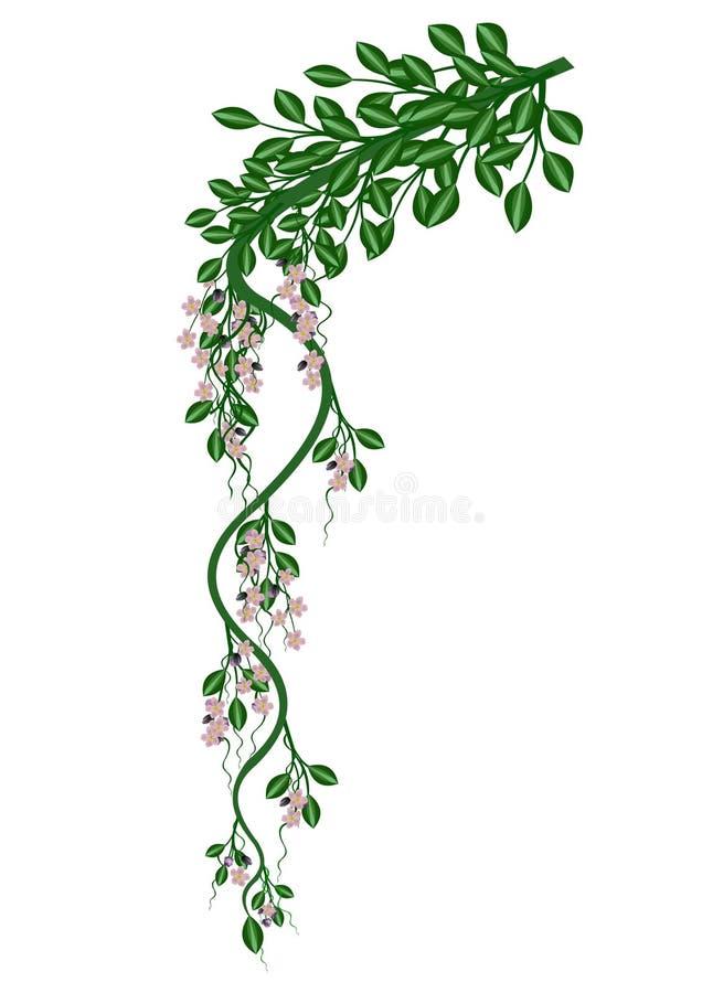 Download φυτό που στρίβεται απεικόνιση αποθεμάτων. εικονογραφία από καλοκαίρι - 2226433