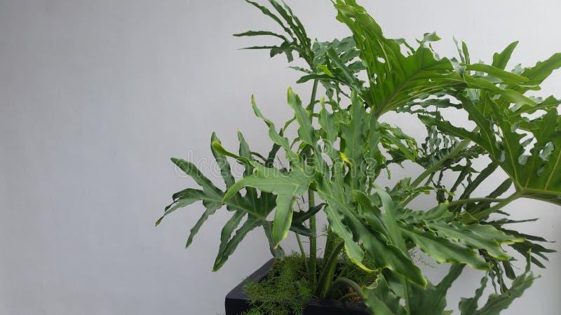 Φυτό σε ένα δοχείο στοκ εικόνες