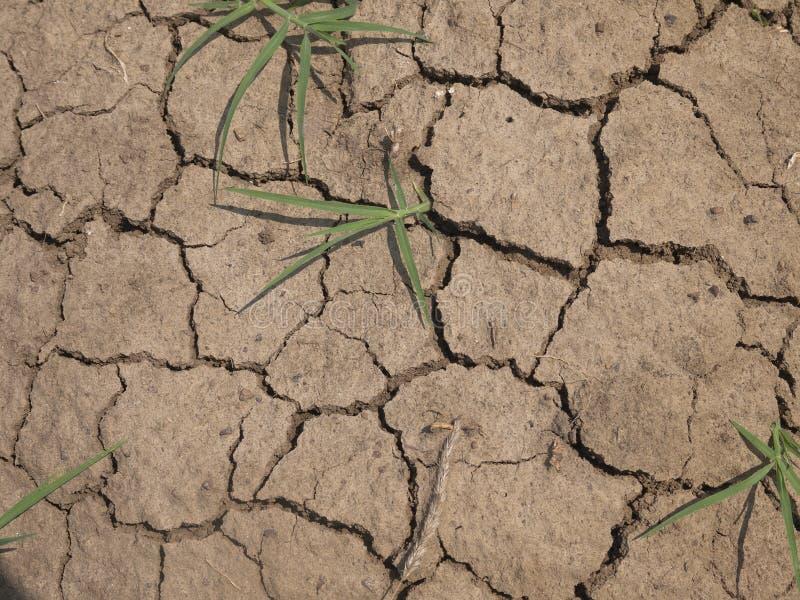 Φυτό στην ξηρά ραγισμένη λάσπη στοκ εικόνες