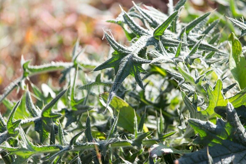 φυτό τραχύ στοκ φωτογραφία με δικαίωμα ελεύθερης χρήσης
