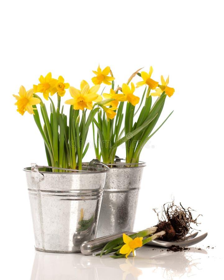 Φυτό των βολβών στοκ εικόνες