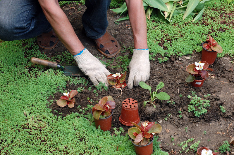 φυτό των σποροφύτων στοκ φωτογραφία